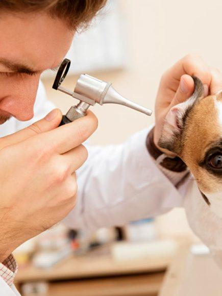 Máster en Patologías Animales Veterinarias (Con Certificación Universitaria Internacional y Reconocimiento de 30 ECTS)
